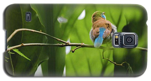 Blue Bird Has An Itch Galaxy S5 Case
