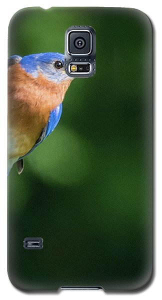 Blue Bird Galaxy S5 Case