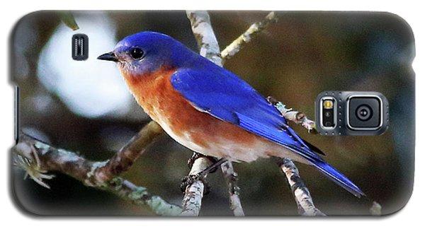 Blue Bird Galaxy S5 Case by Lamarre Labadie