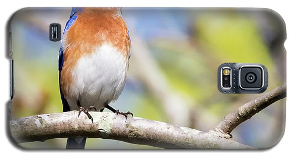 Galaxy S5 Case featuring the photograph Blue Bird by Ricky L Jones