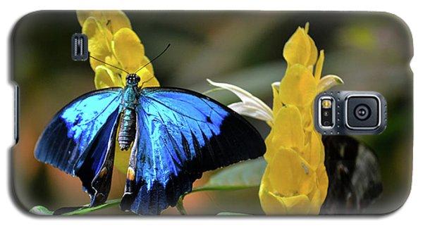 Blue Butterfly Galaxy S5 Case