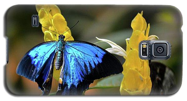 Blue Beauty Butterfly Galaxy S5 Case