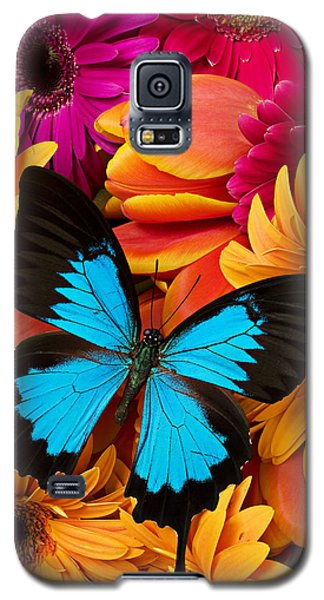 Blue Butterfly On Brightly Colored Flowers Galaxy S5 Case
