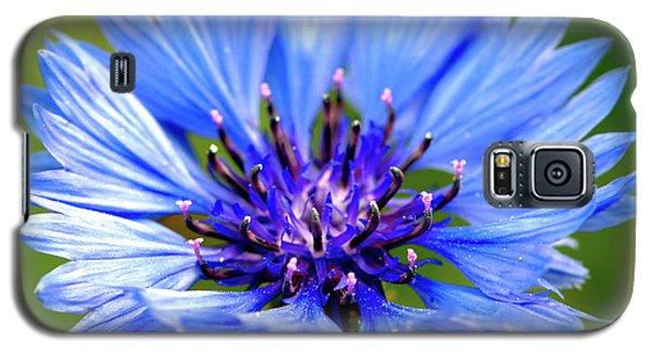 Blue Cornflower Galaxy S5 Case