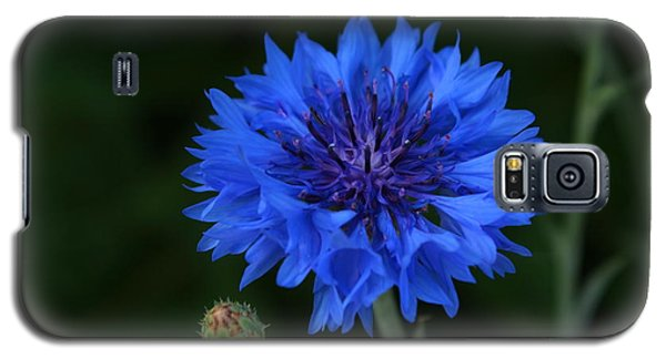 Blue Cornflower Galaxy S5 Case by Marjorie Imbeau