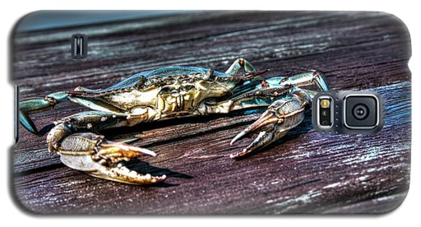 Blue Crab - Above View Galaxy S5 Case