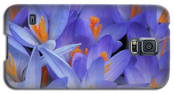 Blue Crocuses Galaxy S5 Case