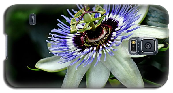 Blue Crown Passion Flower Galaxy S5 Case by Debbie Oppermann