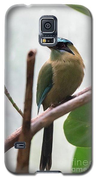 Blue-crowned Motmot Galaxy S5 Case