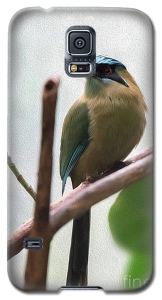 Blue-crowned Motmot Oil Galaxy S5 Case