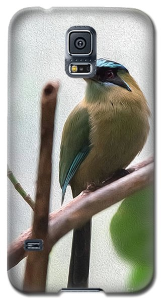 Blue-crowned Motmot Oil Galaxy S5 Case