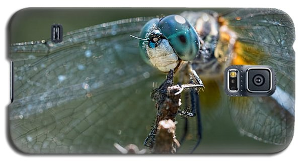 Blue Dasher Dragonfly Galaxy S5 Case