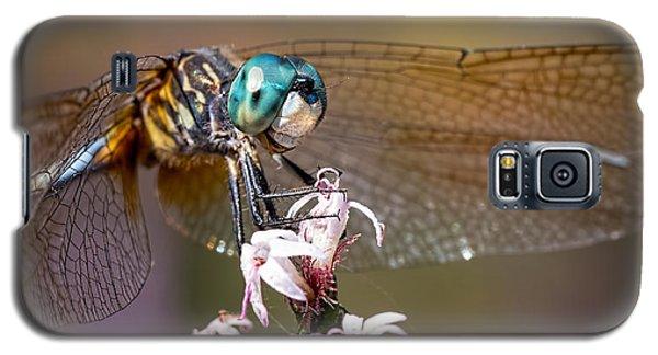 Blue Dasher Dragonfly Resting Galaxy S5 Case
