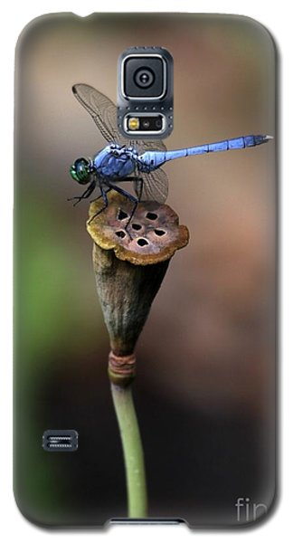 Blue Dragonfly Dancer Galaxy S5 Case
