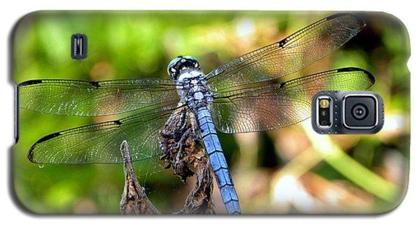 Blue Dragonfly Galaxy S5 Case by Terri Mills