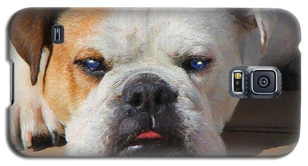 Blue-eyed English Bulldog - Painting Galaxy S5 Case