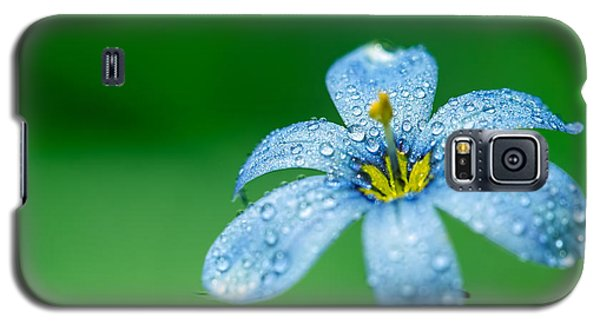 Blue Eyed Grass Flower Galaxy S5 Case