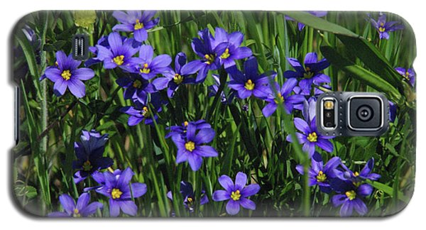Blue Eyed Grass Galaxy S5 Case by Robyn Stacey