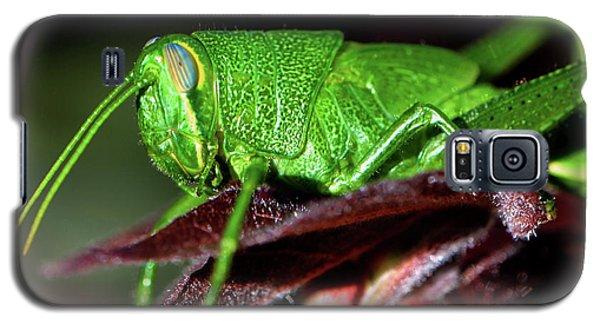 Blue Eyed Green Grasshopper 001 Galaxy S5 Case