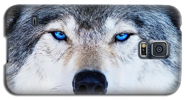 Galaxy S5 Case featuring the photograph Blue Eyed Wolf Portrait by Mircea Costina Photography