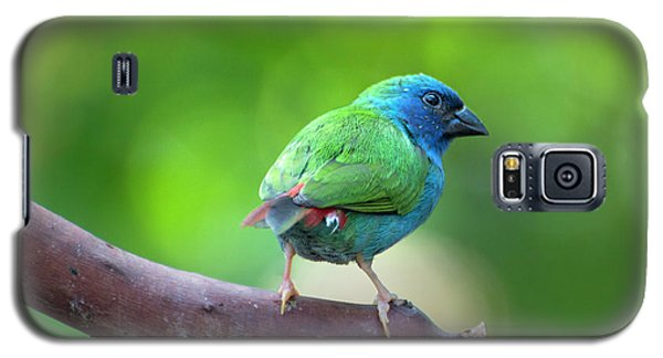 Blue-faced Parrotfinch Galaxy S5 Case