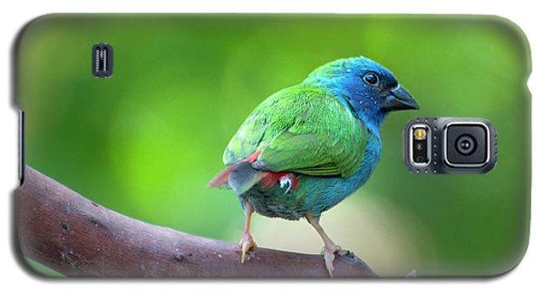 Blue-faced Parrotfinch Galaxy S5 Case