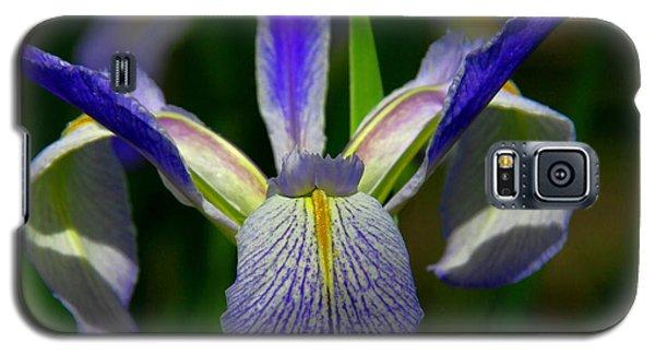 Blue Flag Iris Galaxy S5 Case
