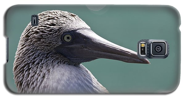 Blue Footed Booby II Galaxy S5 Case by Dave Fleetham