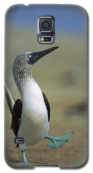 Blue-footed Booby Sula Nebouxii Galaxy S5 Case by Tui De Roy