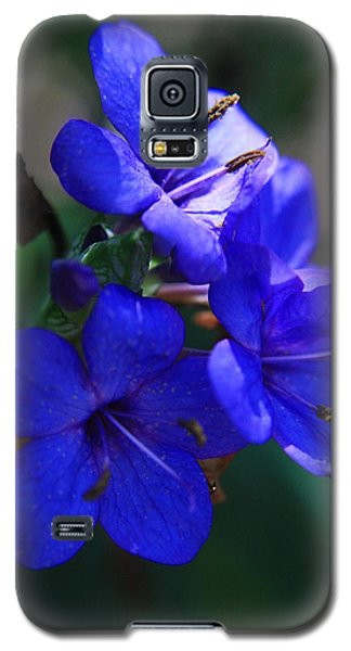 Blue For The Sun Galaxy S5 Case