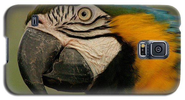 Blue Gold Macaw South America Galaxy S5 Case by Ralph A  Ledergerber-Photography