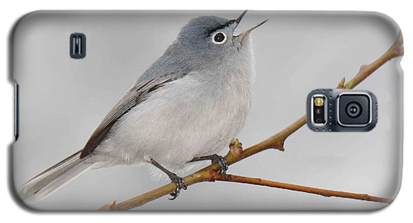 Blue-gray Gnatcatcher Galaxy S5 Case by Alan Lenk