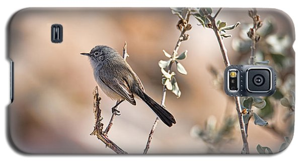 Galaxy S5 Case featuring the photograph Black-tailed Gnatcatcher by Dan McManus