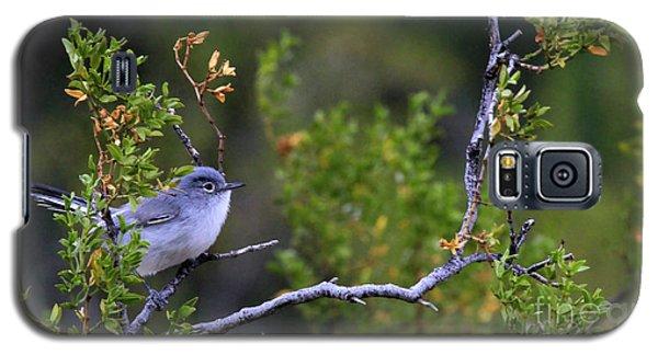 Blue-gray Gnatcatcher  Galaxy S5 Case