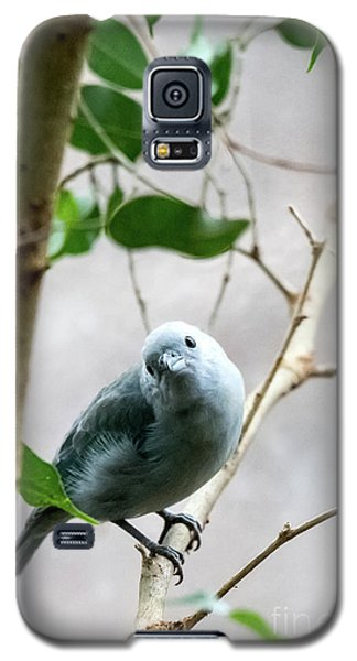 Blue-grey Tanager Galaxy S5 Case