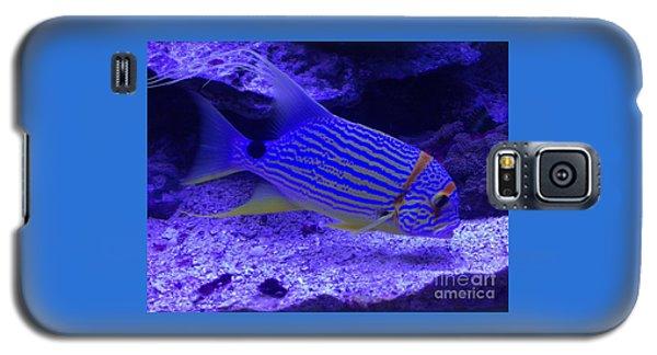 Blue Fish Groupie Galaxy S5 Case