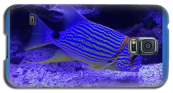 Galaxy S5 Case featuring the photograph Blue Fish Groupie by Richard W Linford
