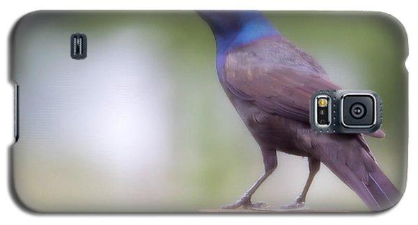 Blue Head Galaxy S5 Case
