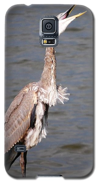 Blue Heron Calling Galaxy S5 Case