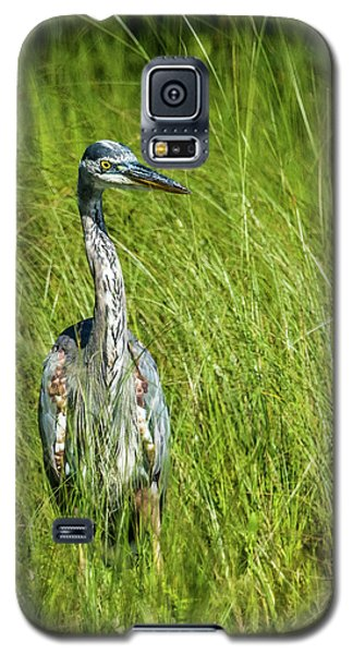 Galaxy S5 Case featuring the photograph Blue Heron In A Marsh by Paul Freidlund
