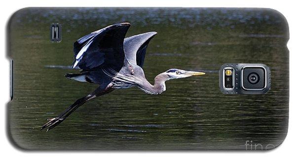 Blue Heron In Flight Galaxy S5 Case