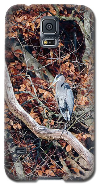 Blue Heron In Tree Galaxy S5 Case