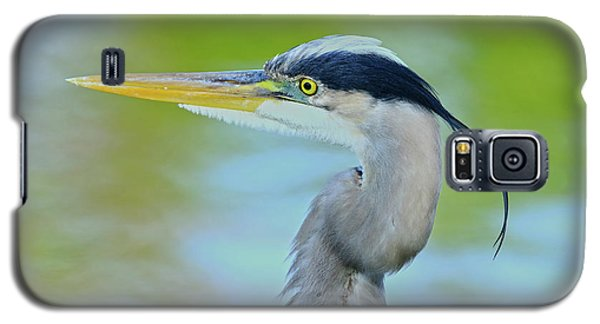 Galaxy S5 Case featuring the photograph Blue Heron Portrait 2017 by Deborah Benoit