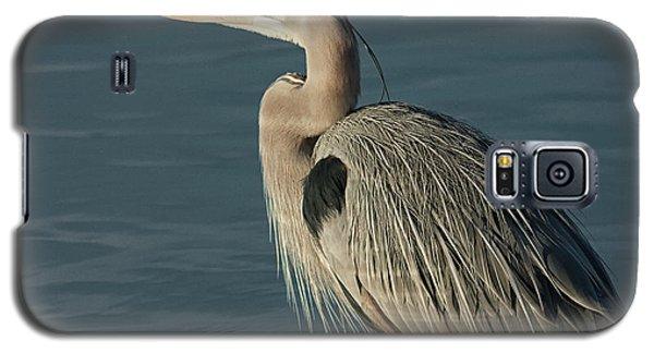 Blue Heron Portrait Galaxy S5 Case