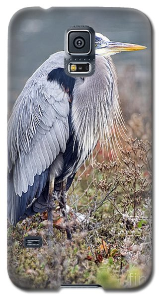 Blue Heron Portrait Galaxy S5 Case by Eddie Yerkish
