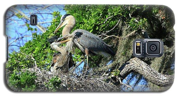 Galaxy S5 Case featuring the photograph Blue Heron Series Baby 1 by Deborah Benoit