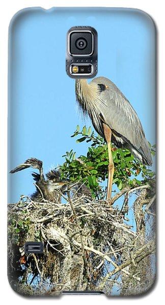 Galaxy S5 Case featuring the photograph Blue Heron Series Baby 2 by Deborah Benoit