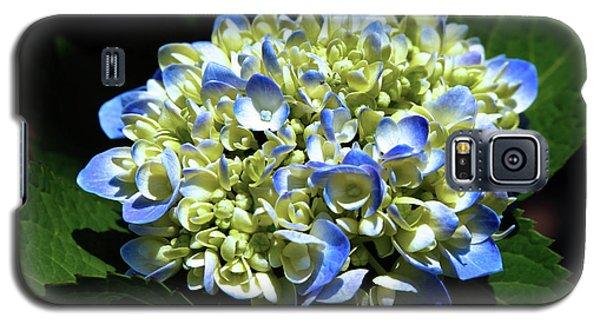 Blue Hydrangea Onstage 2620 H_2 Galaxy S5 Case