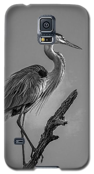 Egret Galaxy S5 Case - Blue In Black-bw by Marvin Spates