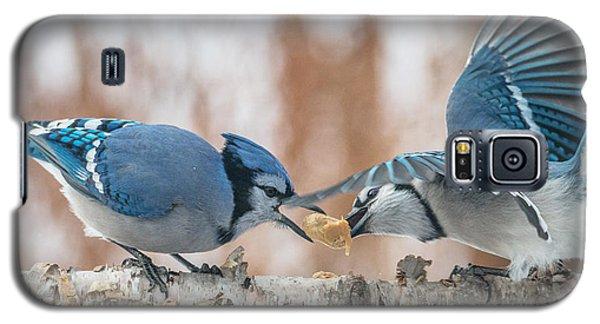 Blue Jay Battle Galaxy S5 Case by Patti Deters